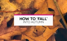 How to Fall into Autumn